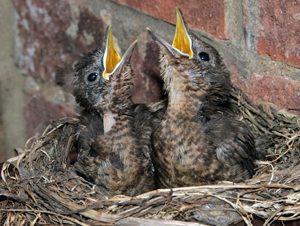 Canto notturno di un uccello triste