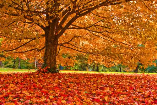 Risultati immagini per tappeto di foglie autunnali